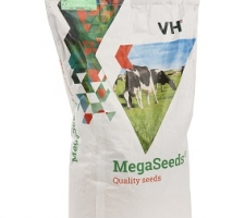 MegaSeeds BG | Visscher Holland